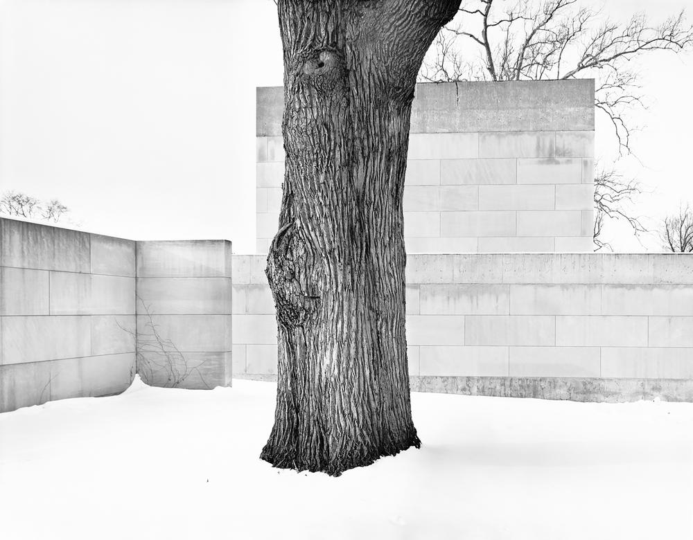 2__Wesleyan-tree-hi-re-best-one-copy.png