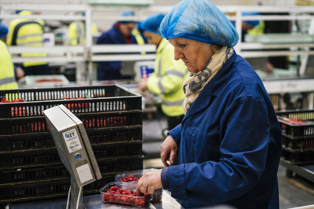 A worker weighs a punnet of raspberries before they are sealed for transport in the pack house at Oakdene Farm, a fruit and vegetable farm owned by W.B. Chambers & Son in Langley, Kent, England, Thursday, Nov. 16, 2017. (David Azia for NBC News)