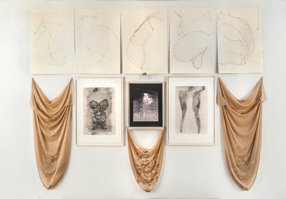Transformation of Disassociation; Arising Female collagraphs, carborundum body prints, palladium print, drawing, hand rubbed relief prints, silk organza, dried rose, peonies and dried hydrangea rock crystal from my gardens