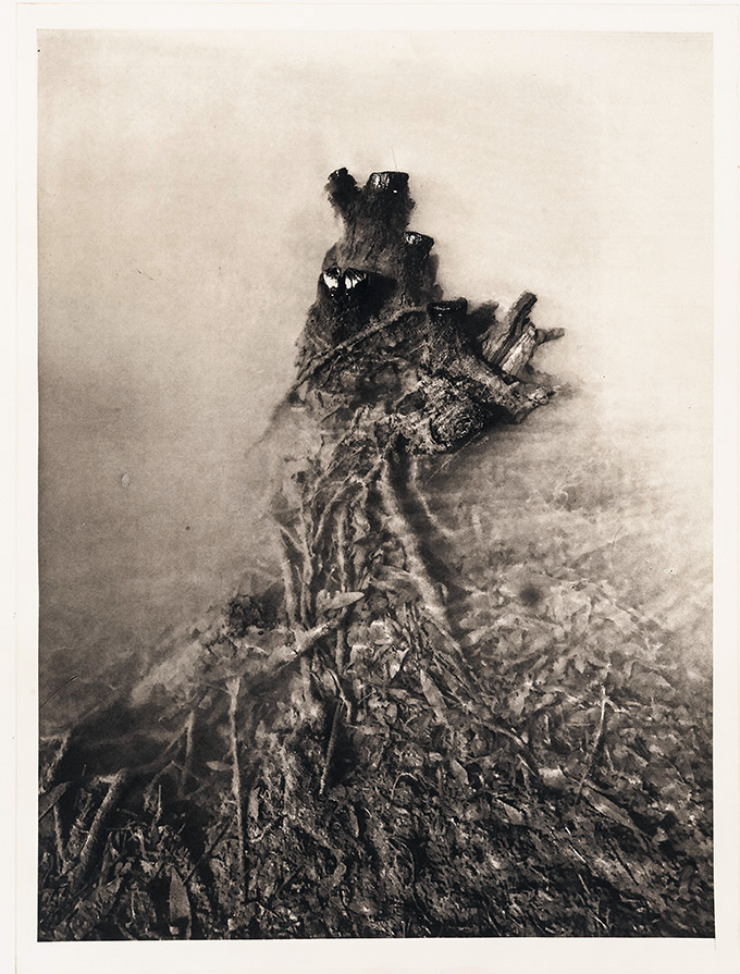 """Severed Truth"", 22"" x 30"", photogravure of severed willow root"