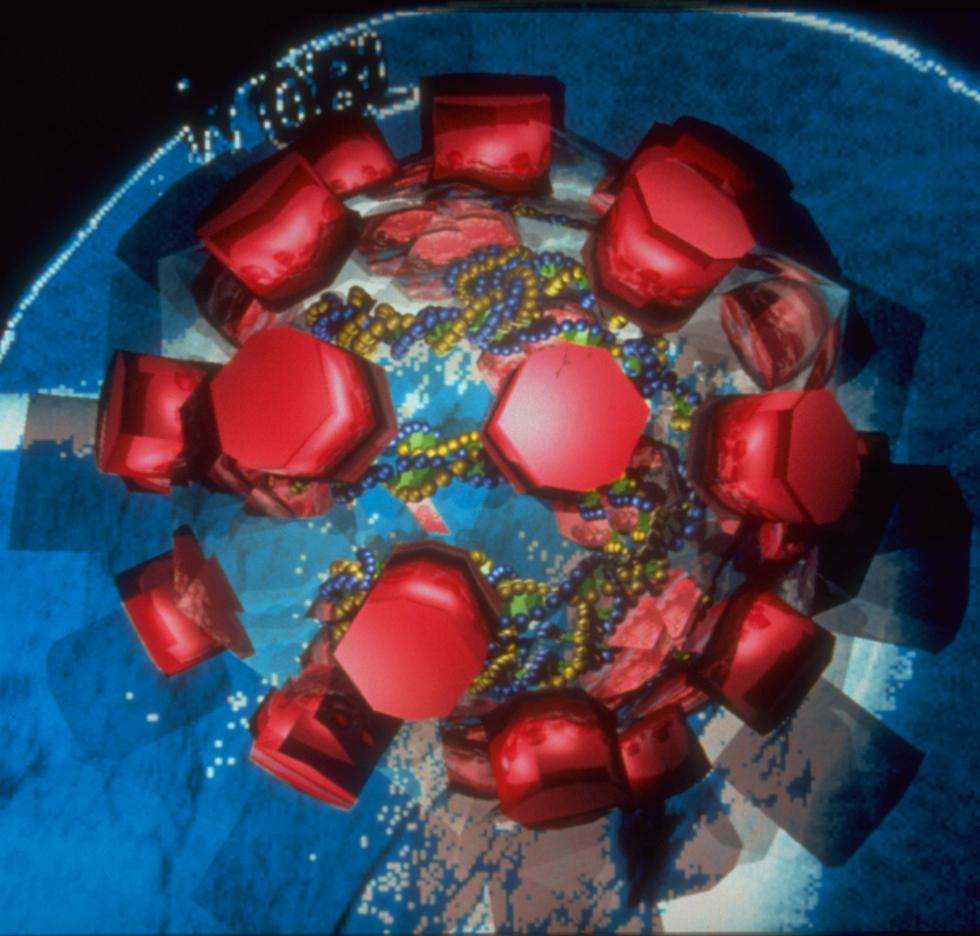 Papilloma Virus, Third Edition, 1990