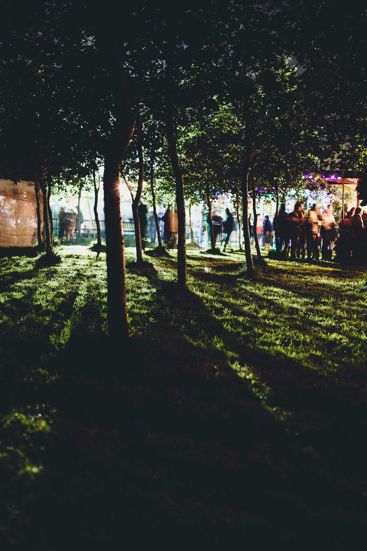 treeline-night-Andrew-Wright-Photography.jpg