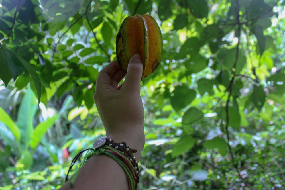 Help yourselves to the fresh fruits and produce around the farm