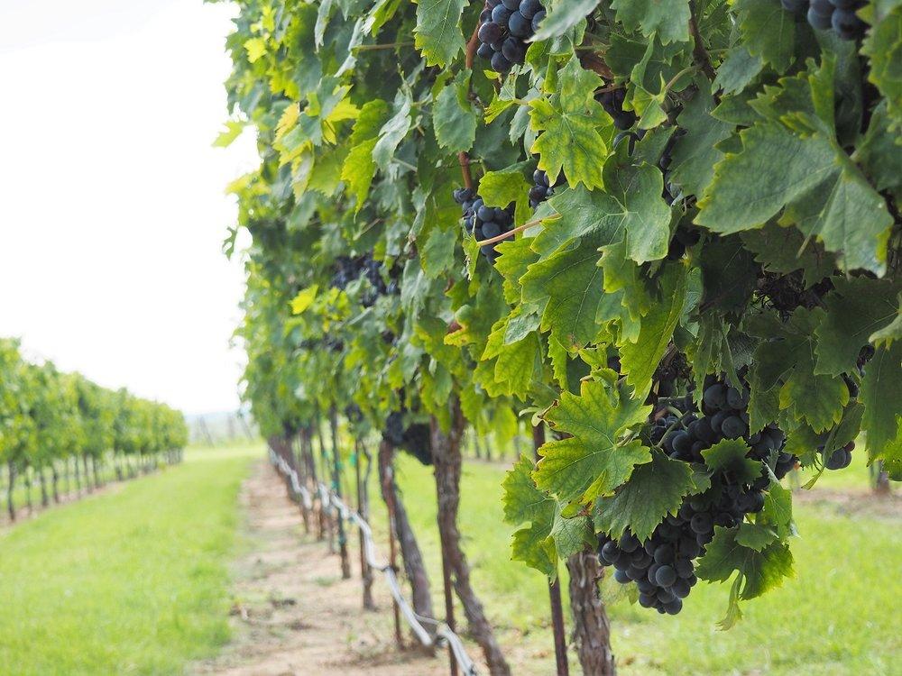 Wine-Trails-Near-Fort-Benning.jpg