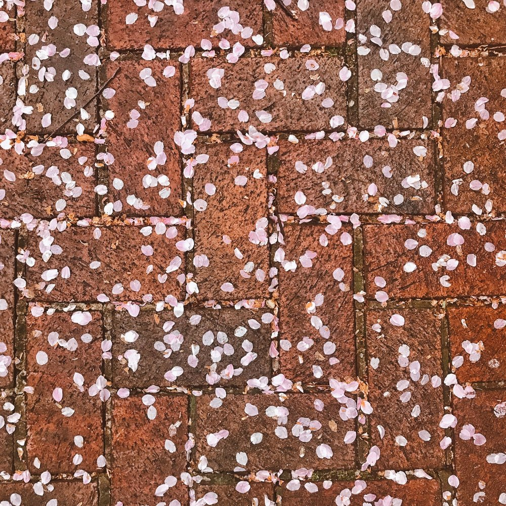 PETALPALOOZA - We're quickly transitioning to Petalpalooza where all the petals are dropping; creating a beautiful, snow-like effect on the ground.