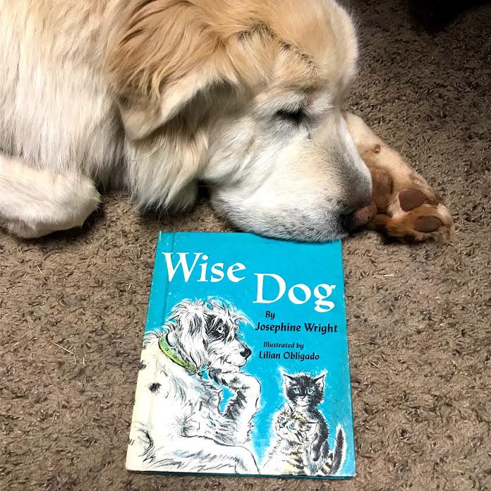 wise dog.jpg