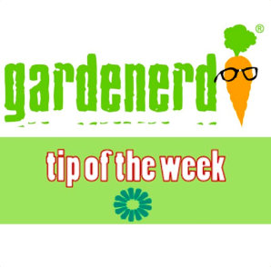 STREAM AND DOWNLOAD GARDENERD TIP OF THE WEEK PODCAST FREE ON PIRATE RADIO