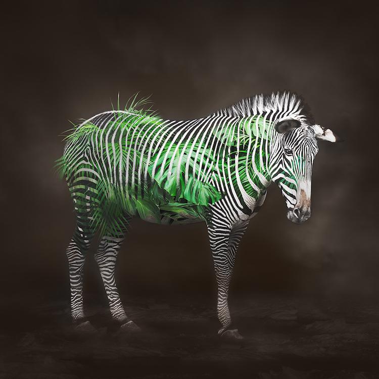Title: Zebra - Life Circulation. Created in Japan 2018. Digitally enhanced. ©️SENSEGRAPHIA / Eriko Kaniwa all rights reserved.