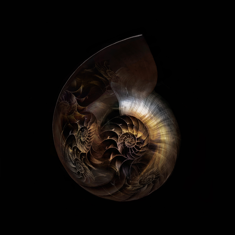 Title: Nautilus Universe. Created in Japan 2018. Digitally enhanced photographic art work. ©️SENSEGRAPHIA / Eriko Kaniwa all rights reserved.