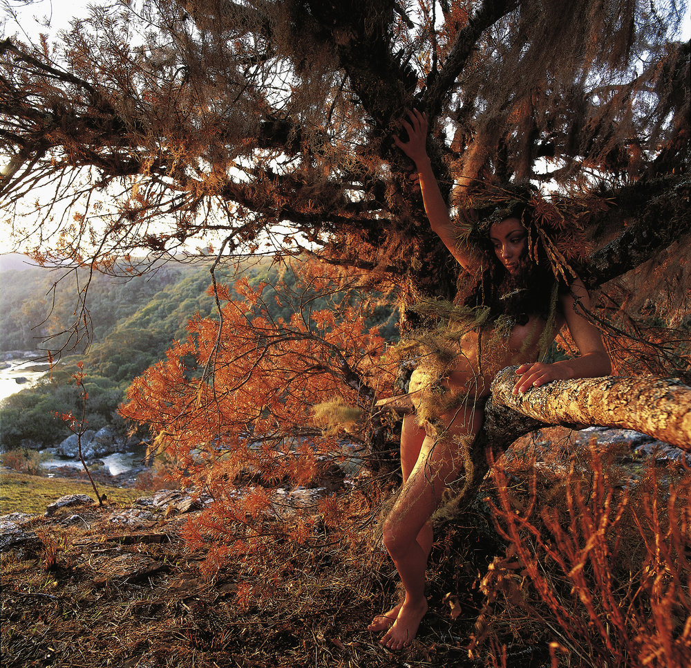Elemental Cintia Red Tree Autumm