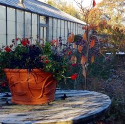 Autumn at Ivy Lodge