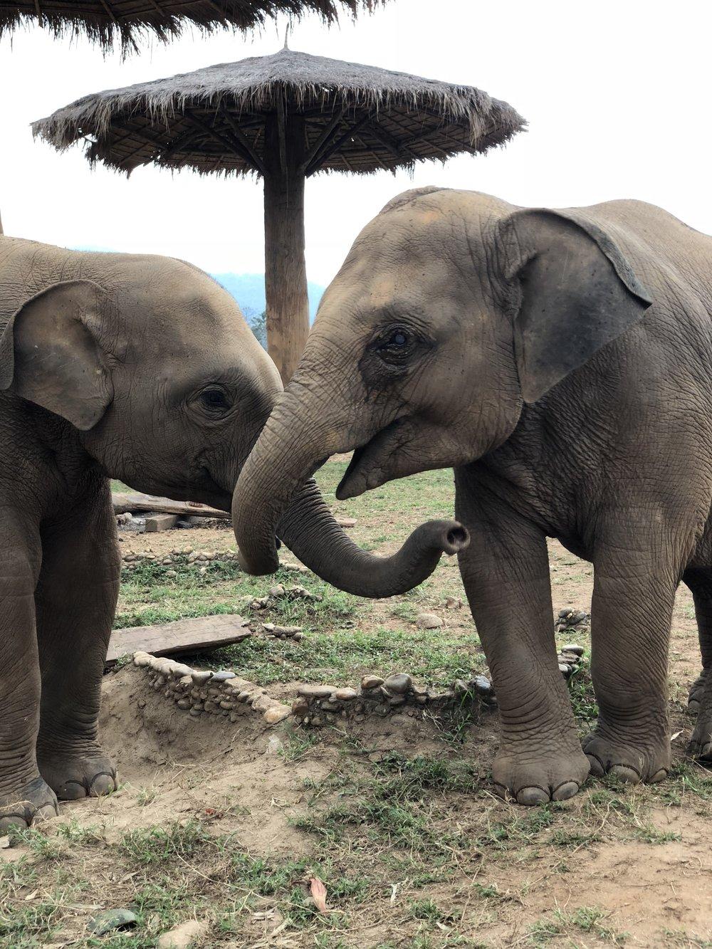 Elephant Sanctuaries in Thailand | The Lavorato Lens