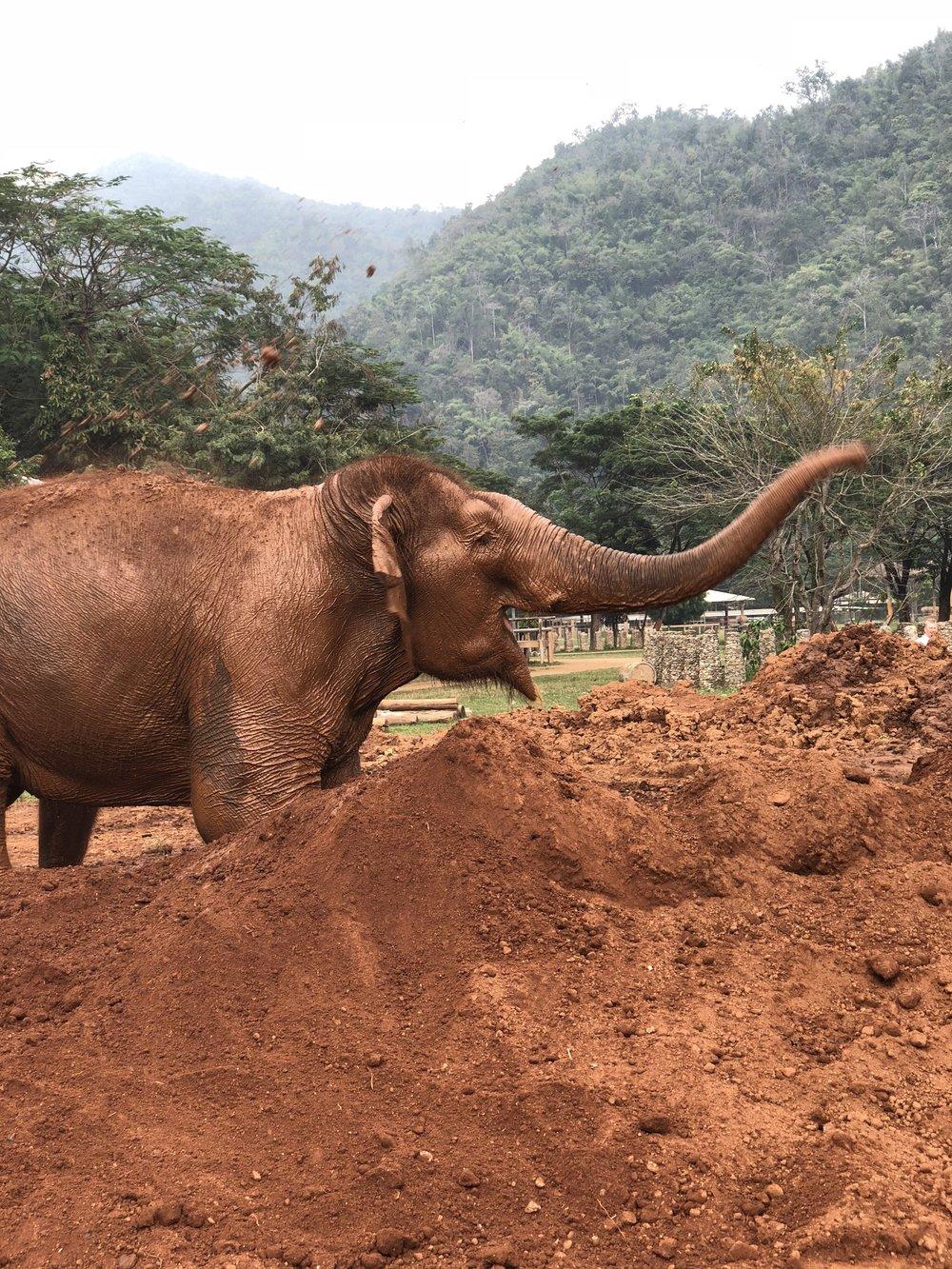 Elephant mudbath | Choosing an ethical elephant sanctuary | The Lavorato Lens