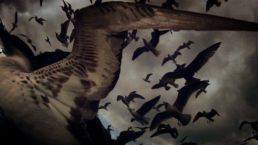 leviathan-birds1.jpg