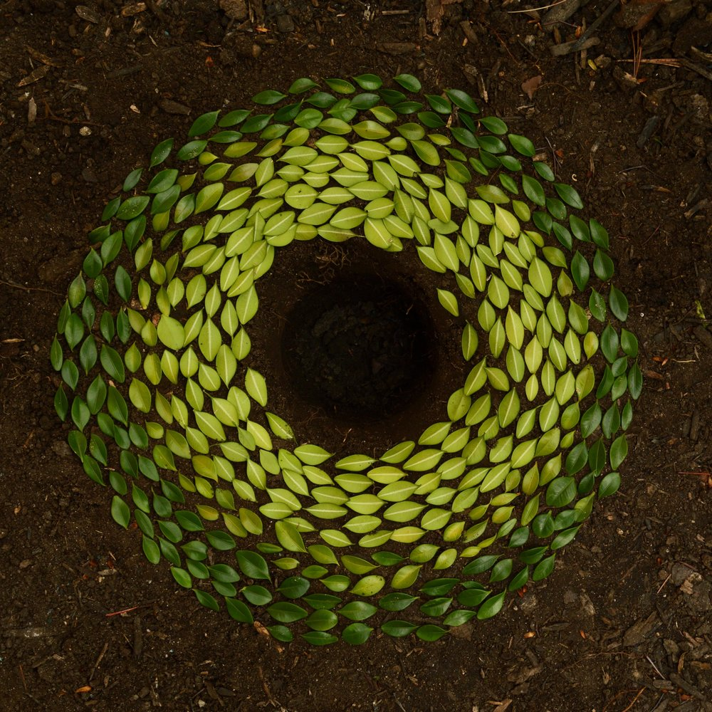 Circle of green leaves on brown dirt