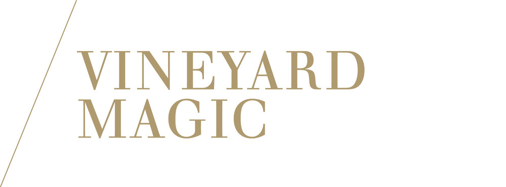 vineyard magic
