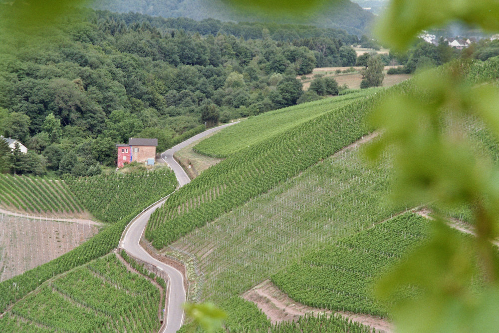Wiltinger Kupp, Weingut VOLS.jpg