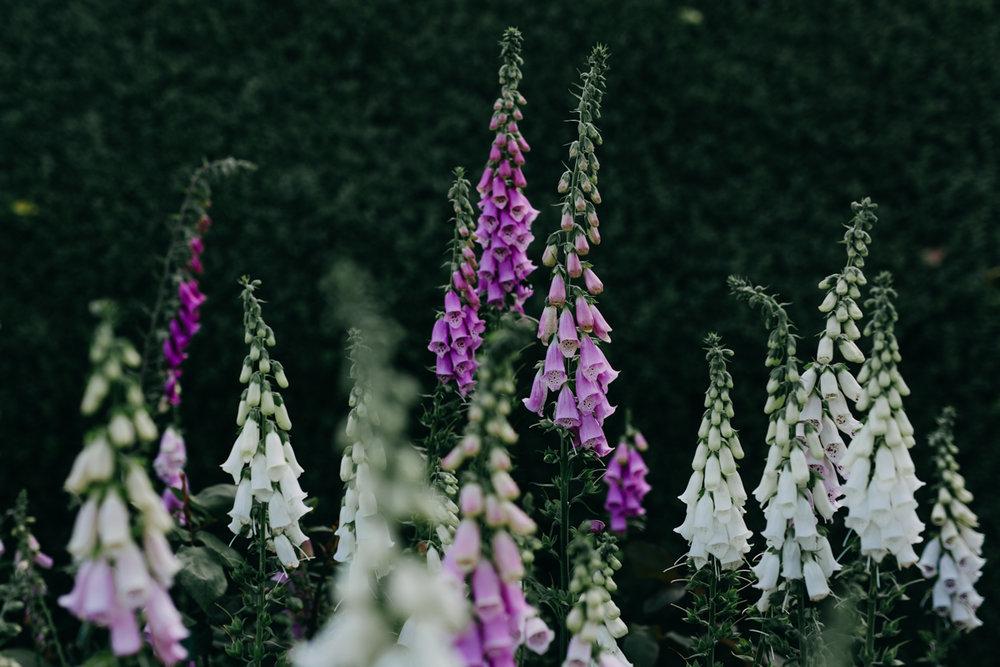 Rousham-Oxfordshire-garden_003.jpg