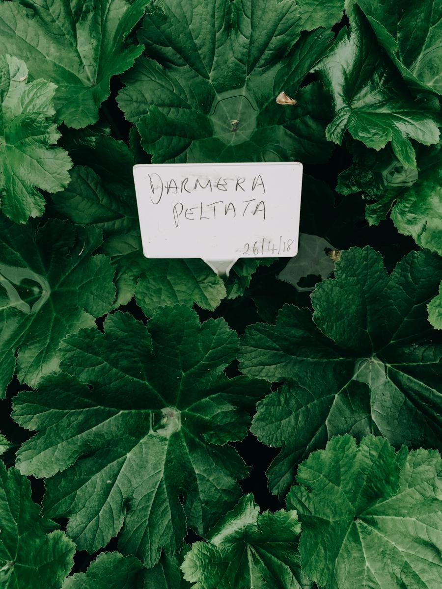 orchard-dene-nurseries-eva-nemeth_05.jpg