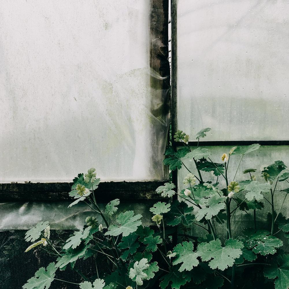 orchard-dene-nurseries-eva-nemeth_08.jpg