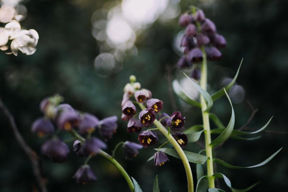 flower-arrangment-class-hambleden-eva-nemeth-photographer_03.jpg