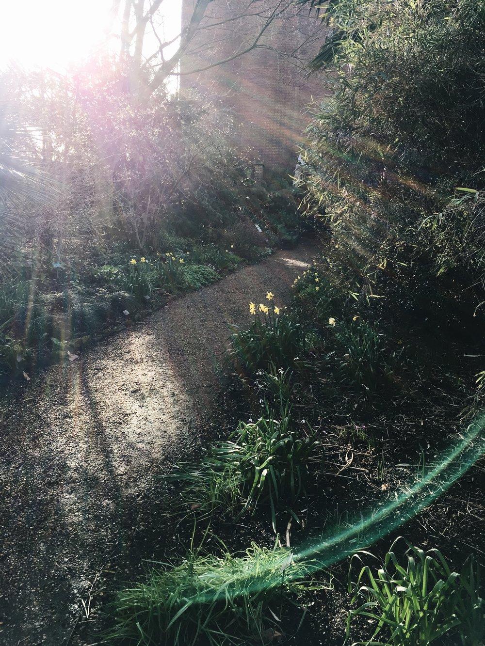 Chelsea-phsysic-garden-eva-nemeth_12b_JPG.jpg