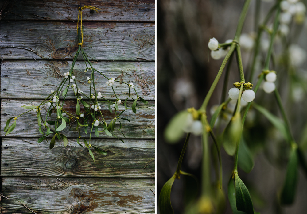 garden-shed-christmas-evanemeth_06.jpg