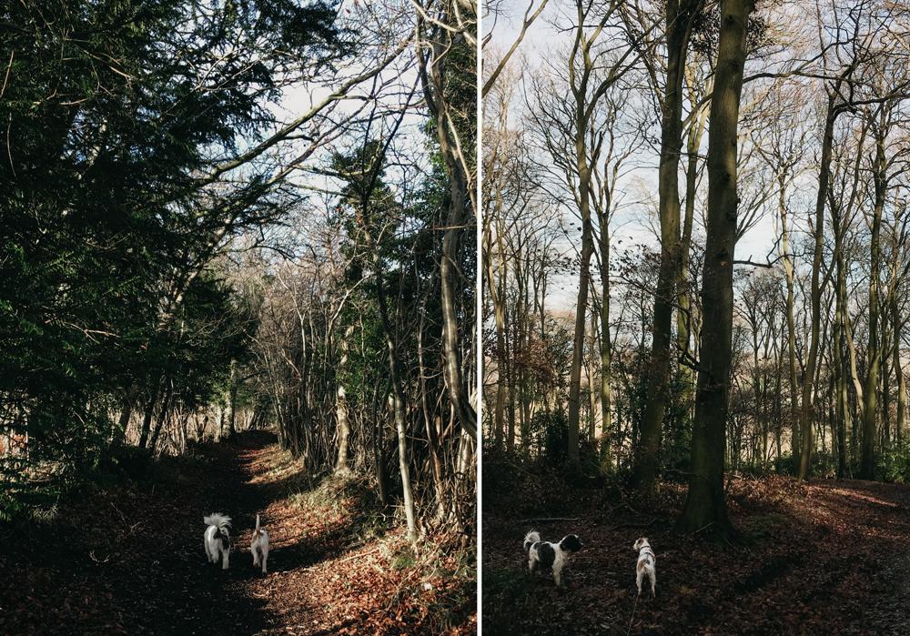 Pishill-winter-walk_003.jpg