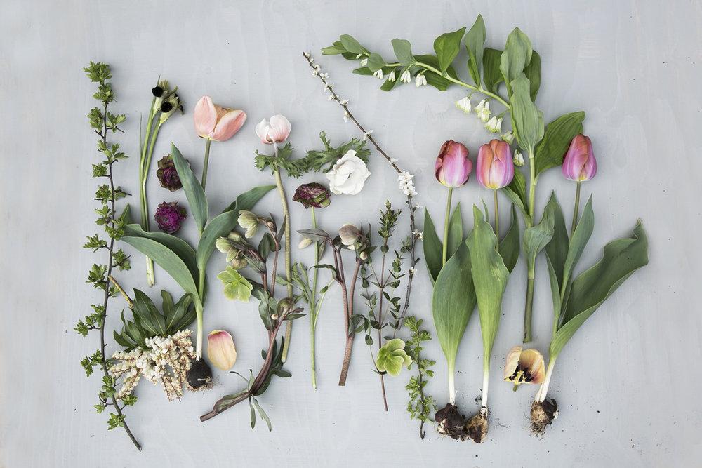 eva-nemeth-spring-flowers.jpg