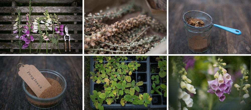 growing-flowers-from-seeds.jpg
