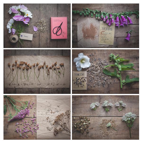 international-garden-photographer-eva-nemeth-igpoty_03.jpg