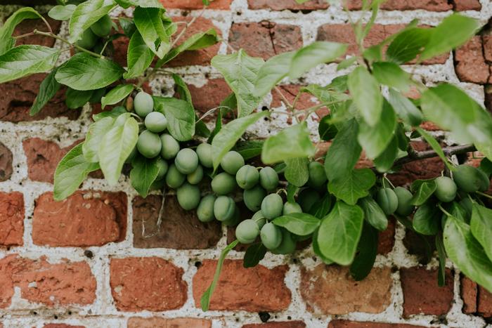 Bradenham-manor-garden-photography-09.jpg