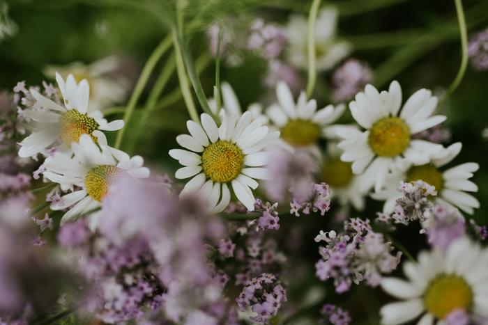 Bradenham-manor-garden-photography-15.jpg