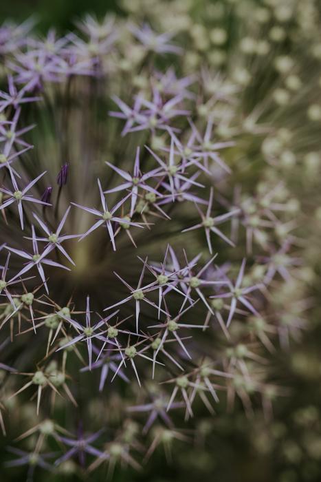 Bradenham-manor-garden-photography-18.jpg