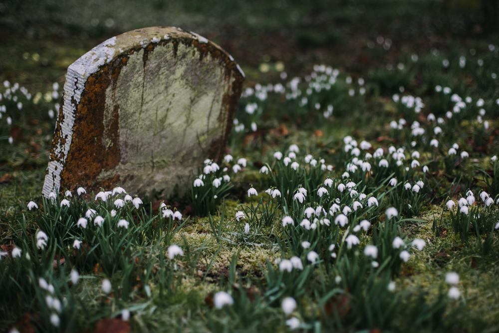swyncombe-snowdrops-churchyard-oxfordshire-evanemeth_08.jpg