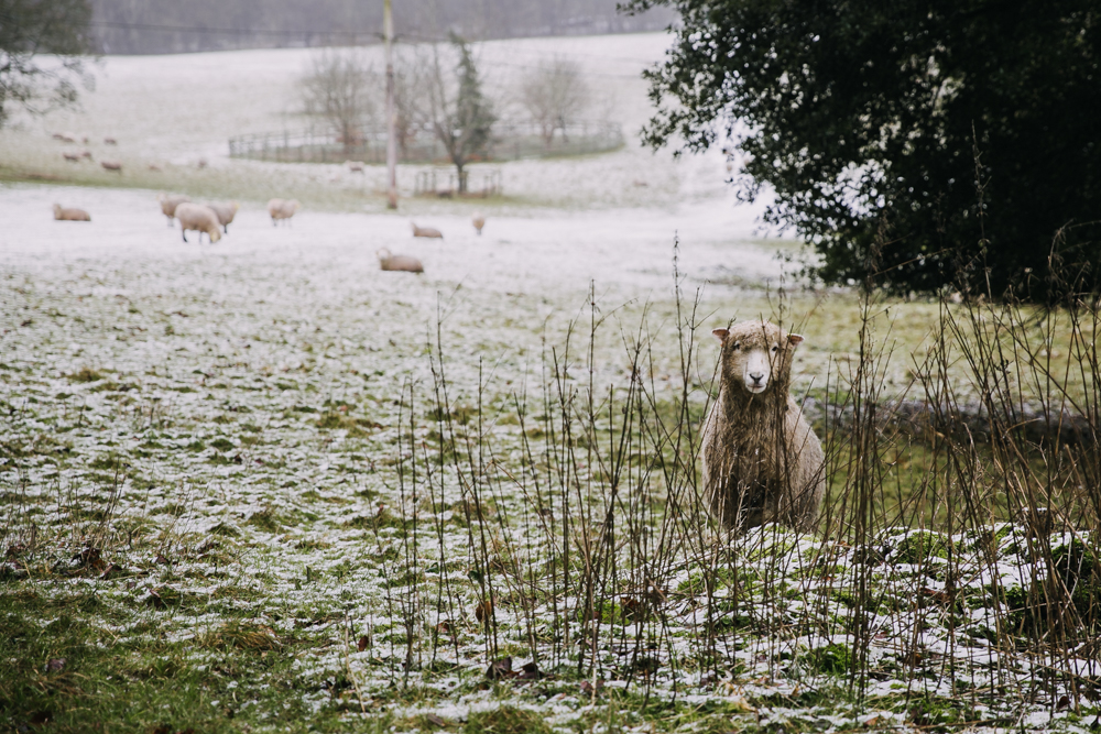 swyncombe-snowdrops-churchyard-oxfordshire-evanemeth_16.jpg