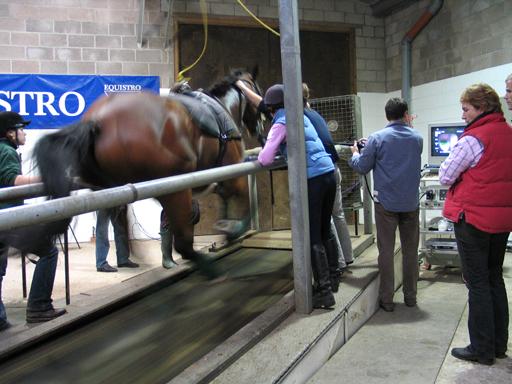 Treadmill testing at Hartpury College where Tim Galer investigated over 600 horses for upper airway dysfunction