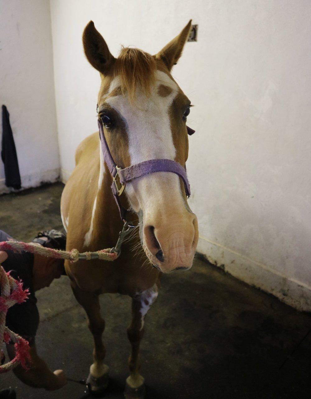 Pony with EMS .jpg