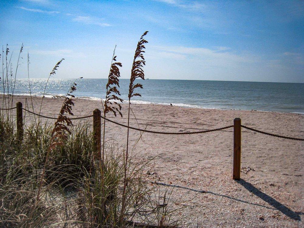 Florida Sea Grass