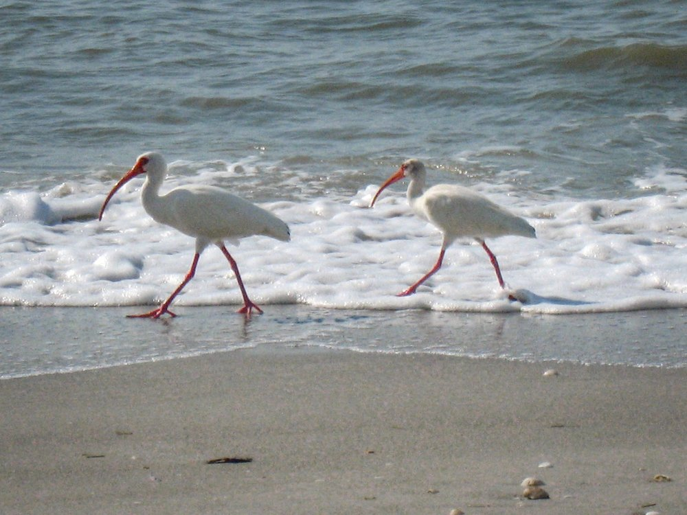 Two beach birds_IMG_2404.jpg
