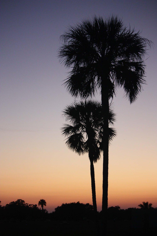 FL palm trees_IMG_8966.jpg