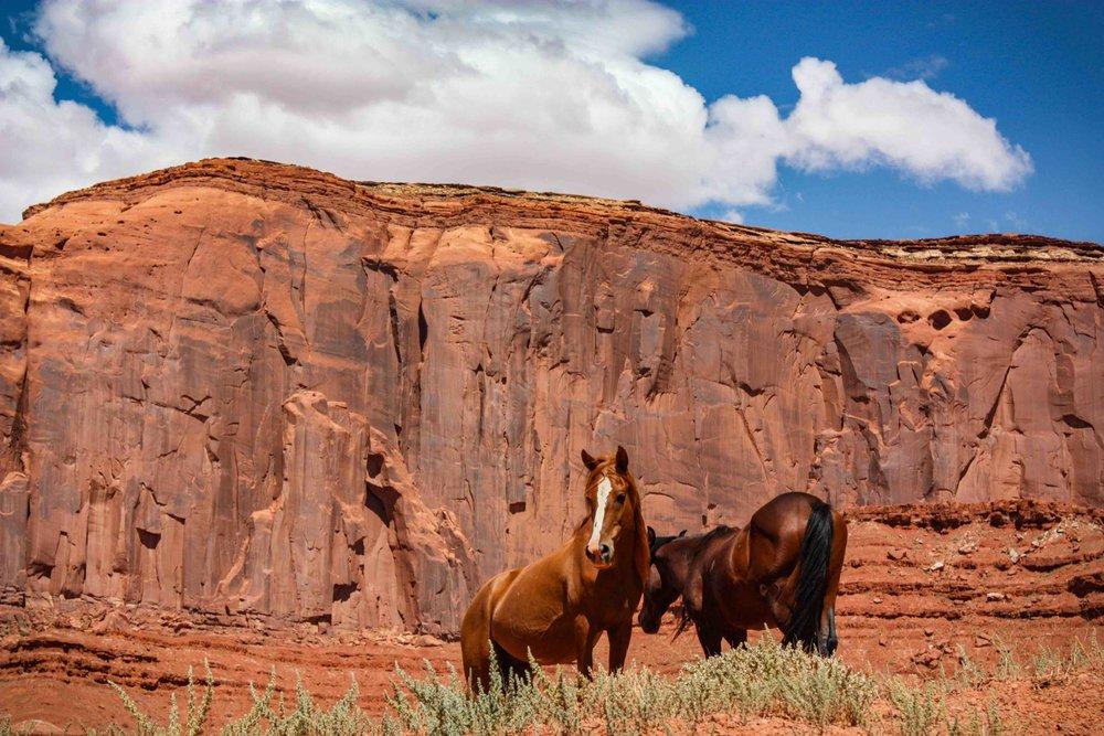 Canyon Horses_7691.jpg