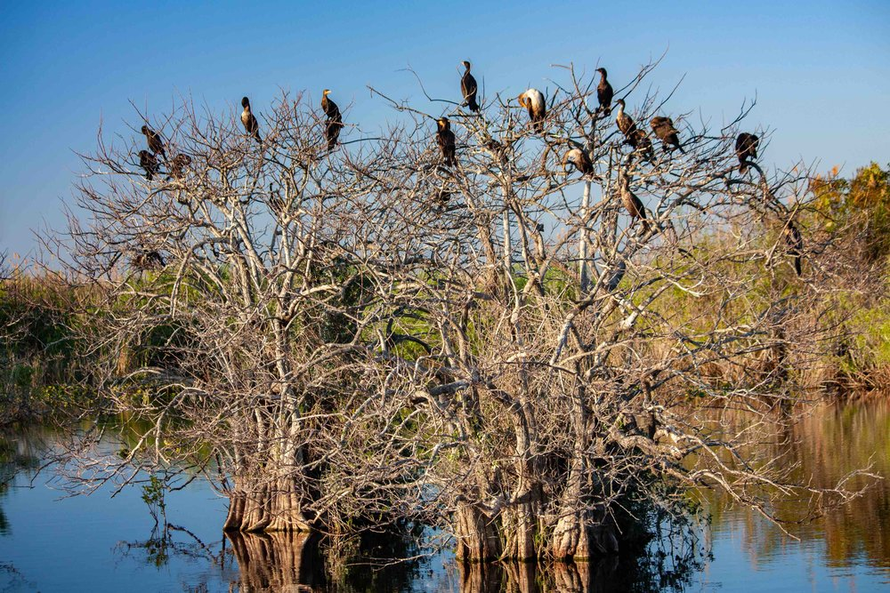 Bird Tree_Everglades.jpg