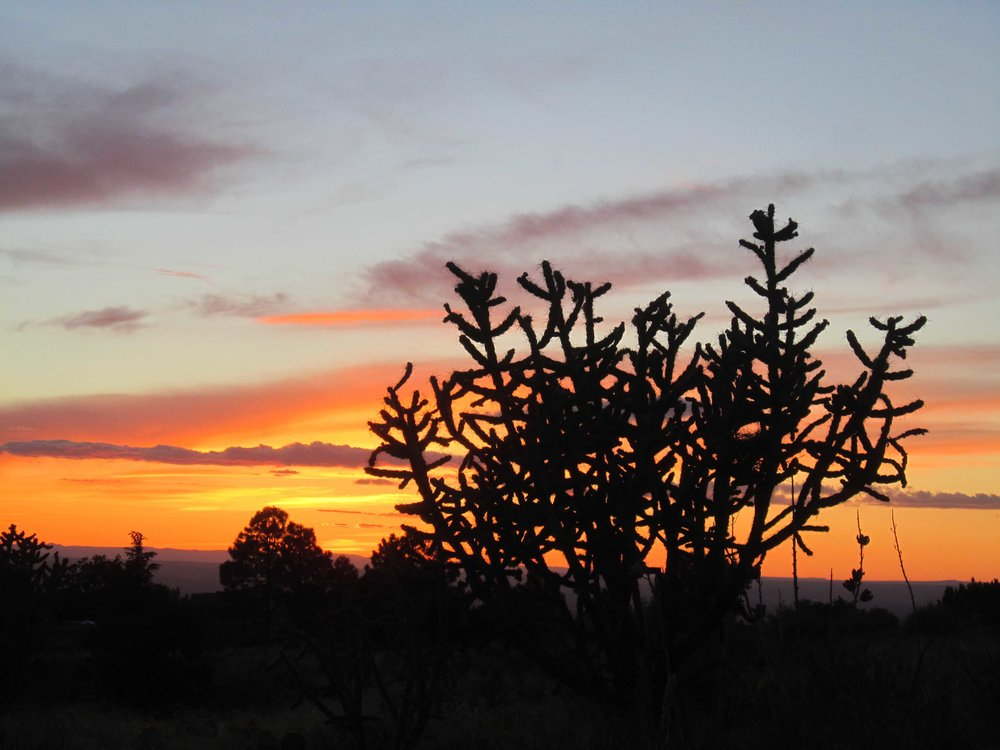Cholla Sunset_0419.jpg