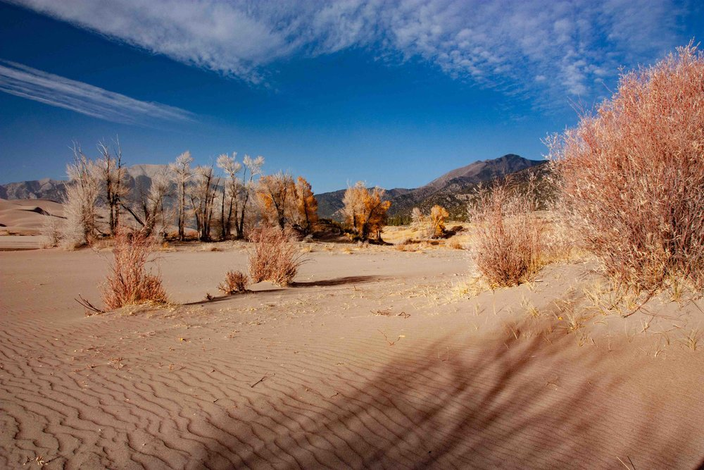 Fall Sand Dunes