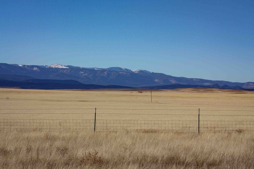 New Mexico Plains