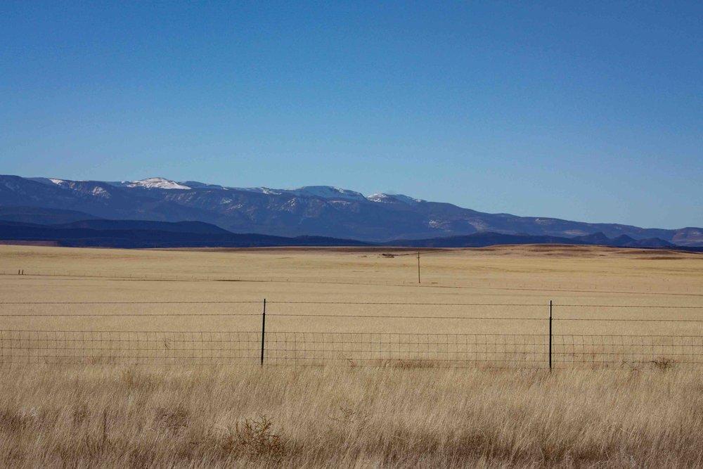 Prairie Grass.jpg