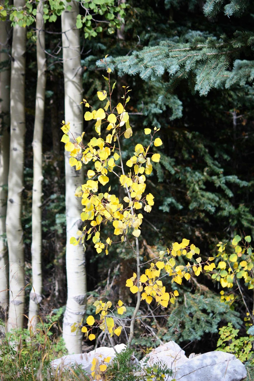 Apen Fall Leaves_8001.jpg