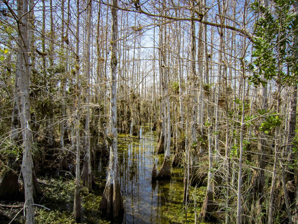 Everglades_2561.jpg