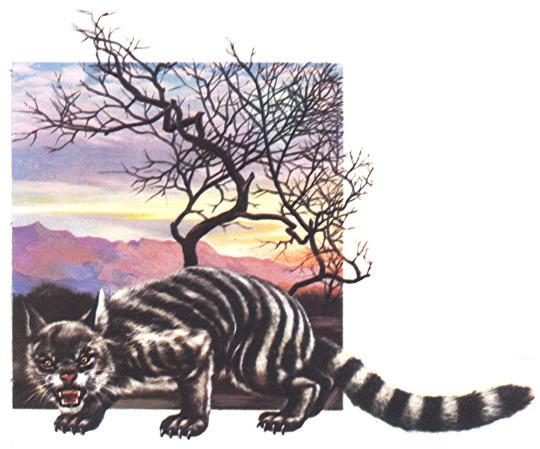 queensland tiger.jpg